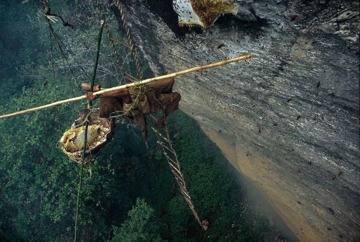 Himalajski miód jednym z najsilniejszych narkotyków na świecie