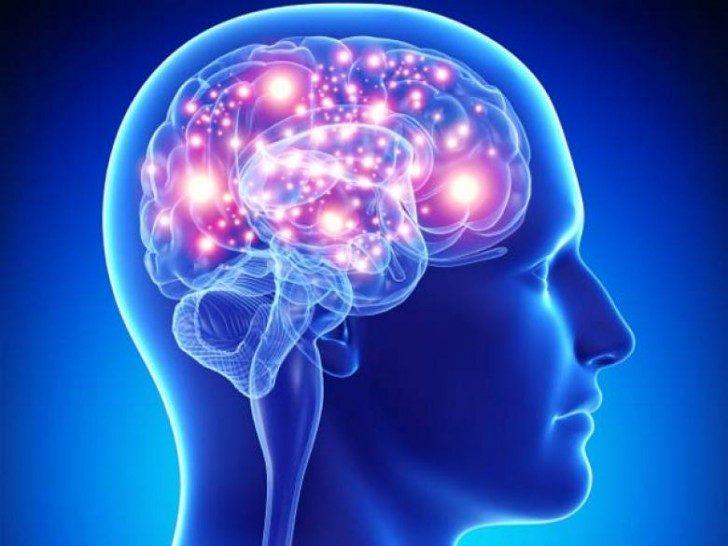mozg-pory-roku