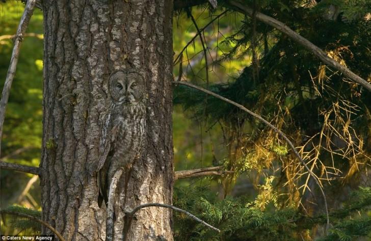 Naturalny kamuflaż – umiejętność, która pozwala zwierzętom pozostawać niewidocznymi