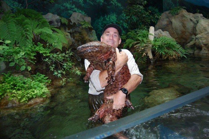 giant-salamander-2
