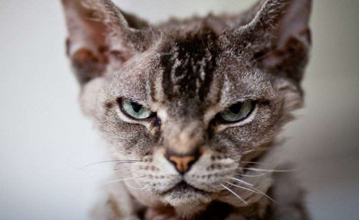 o-ANGRY-CAT-facebook