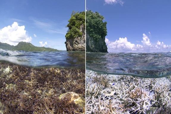 wybielanie-korali-1