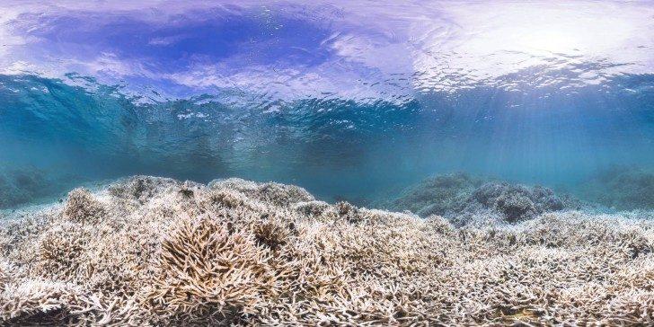 wybielanie-korali-2
