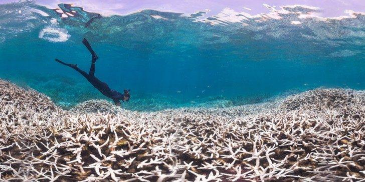 wybielanie-korali-3