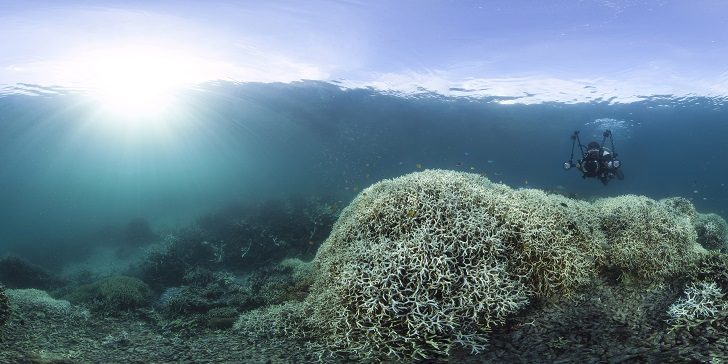 wybielanie-korali-4
