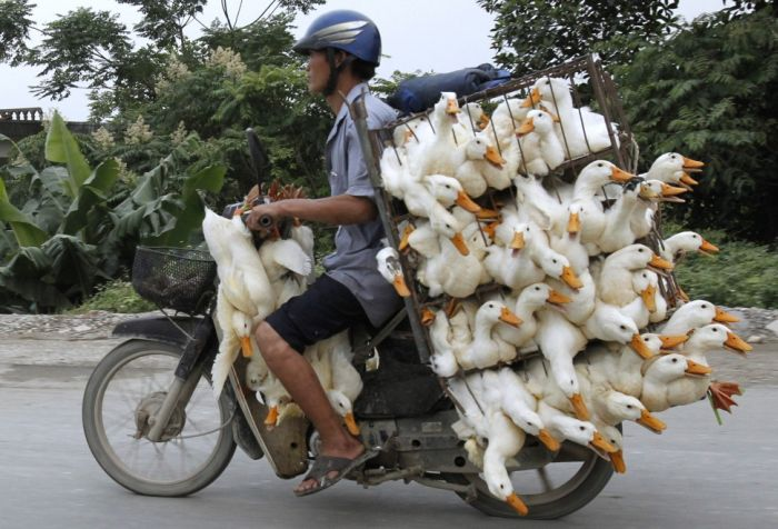 yes-you-can-this-is-how-the-worlds-most-overloaded-transport-looks-like-30694