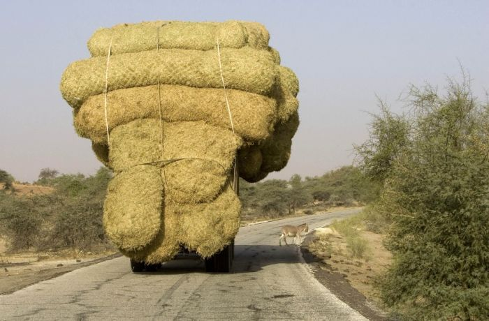 yes-you-can-this-is-how-the-worlds-most-overloaded-transport-looks-like-77197