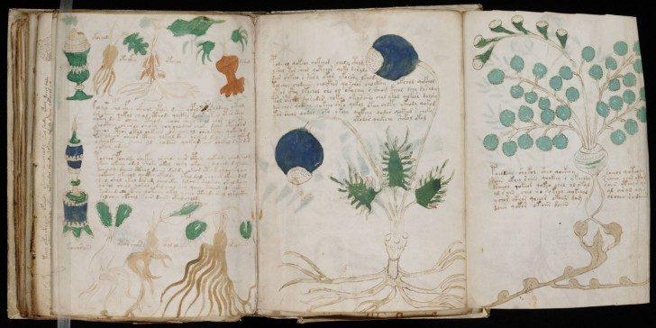 Voynich_Manuscript1