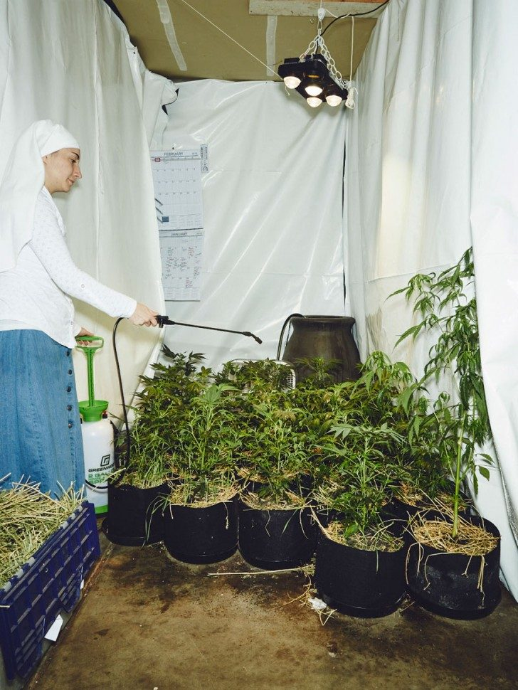 nuns-growing-weed-to-heal-the-world-85493