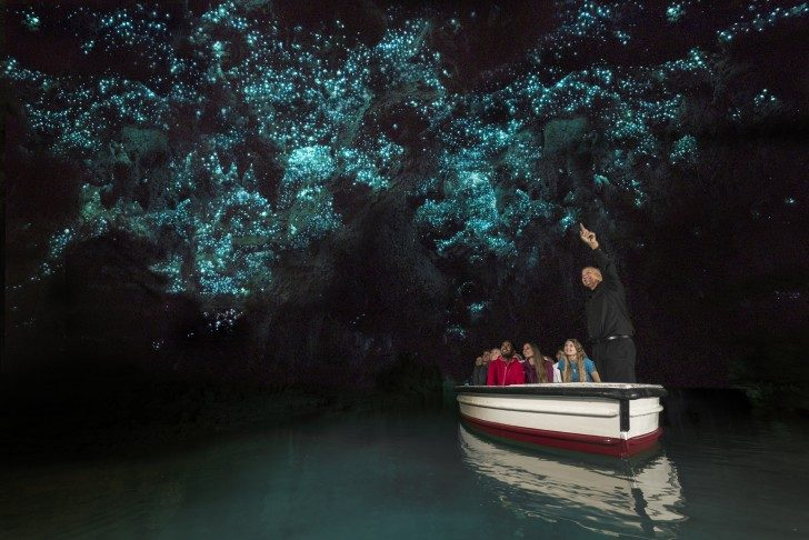waitomo-glowworm-caves-discover-waitomo-new-zealand.ClVsMA