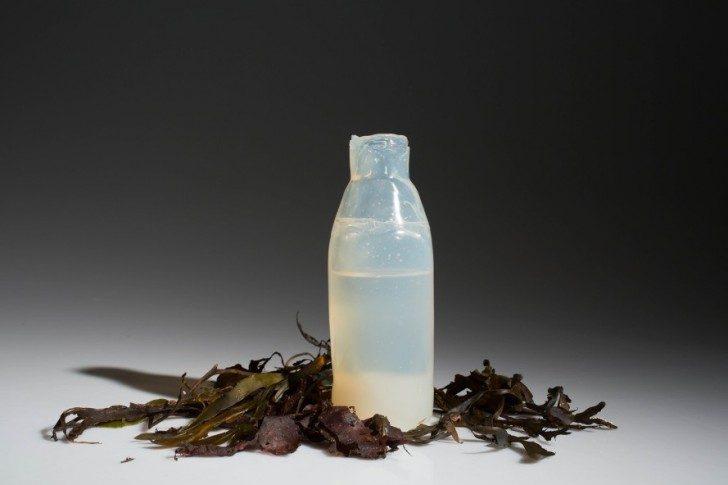 Algae-Water-Bottle-889x592