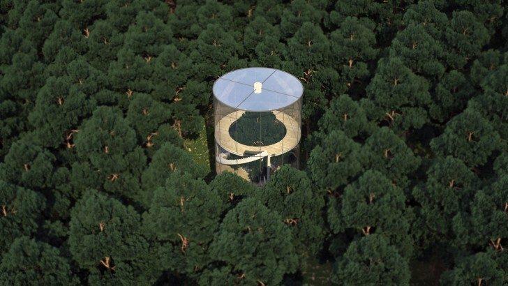 dom-drzewo-5