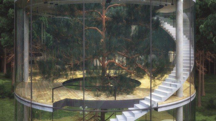 dom-drzewo-6