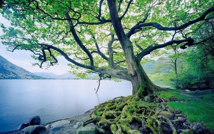 drzewa-3