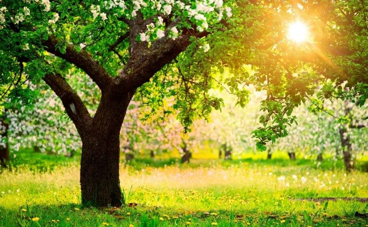 drzewa-4