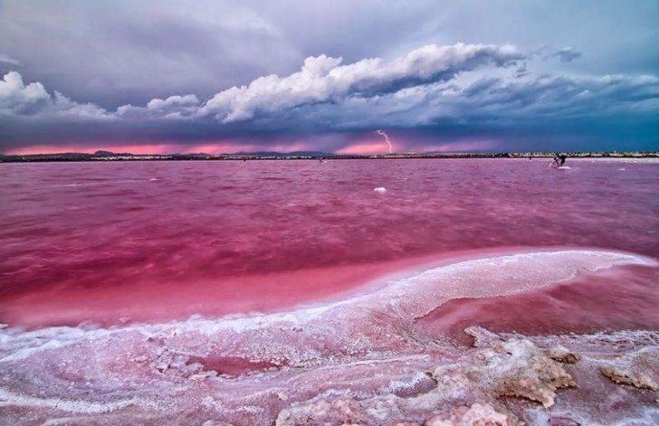 lagoona-rosa