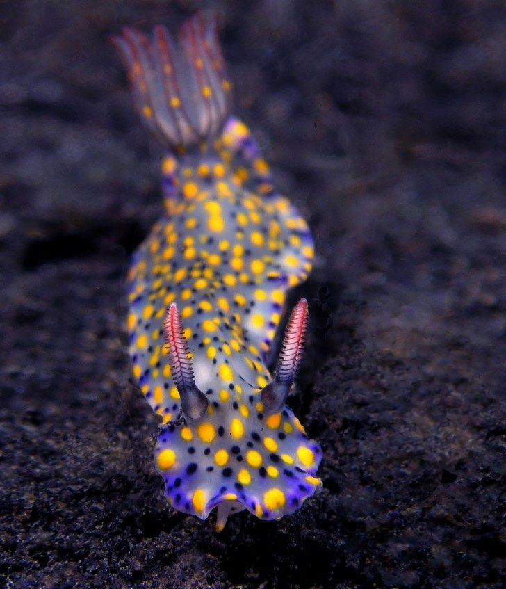 this-are-not-an-alien-creatures-just-a-weird-sea-slugs-26178