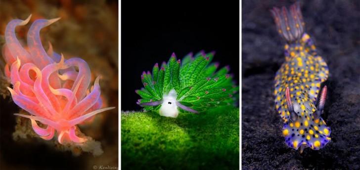 Niezwykłe morskie ślimaki