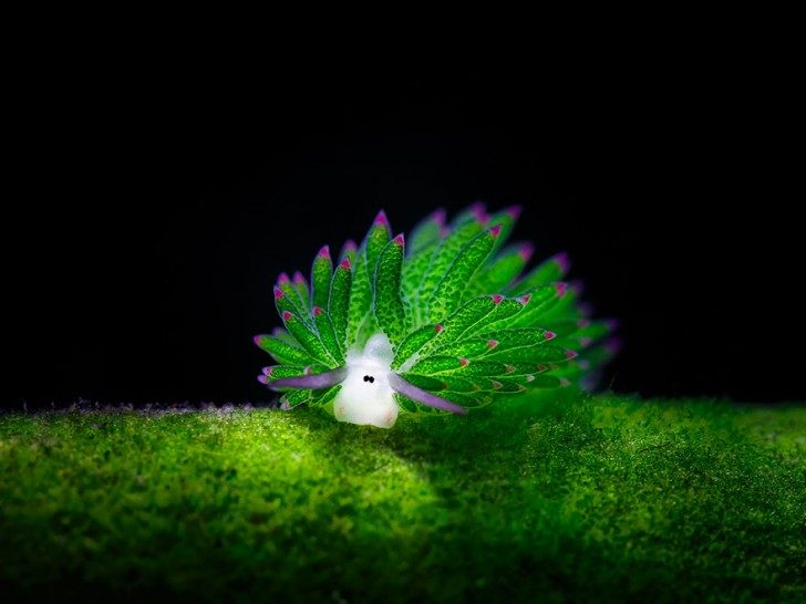 this-are-not-an-alien-creatures-just-a-weird-sea-slugs-48126
