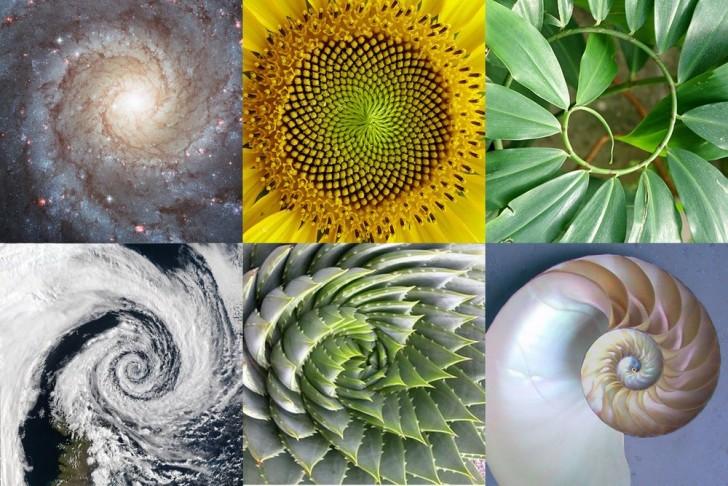 Geometria roślin. Ciąg Fibonacciego w przyrodzie