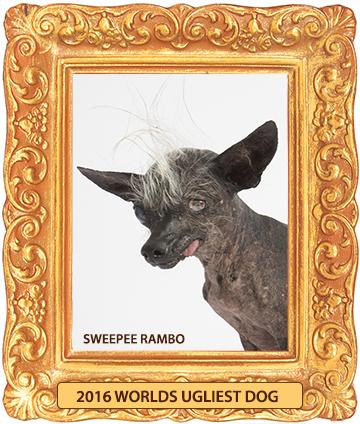 Sweepee_Rambo_2016_Worlds_Ugliest_Dog_Framed-360