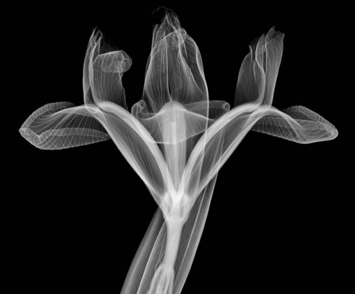 X-Ray-photography-by-Nick-Veasey-8