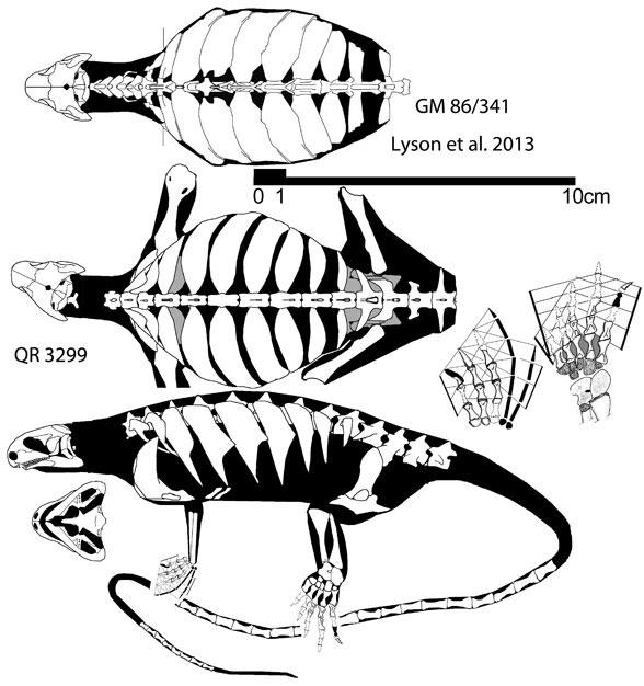 Eunotosaurus africanus