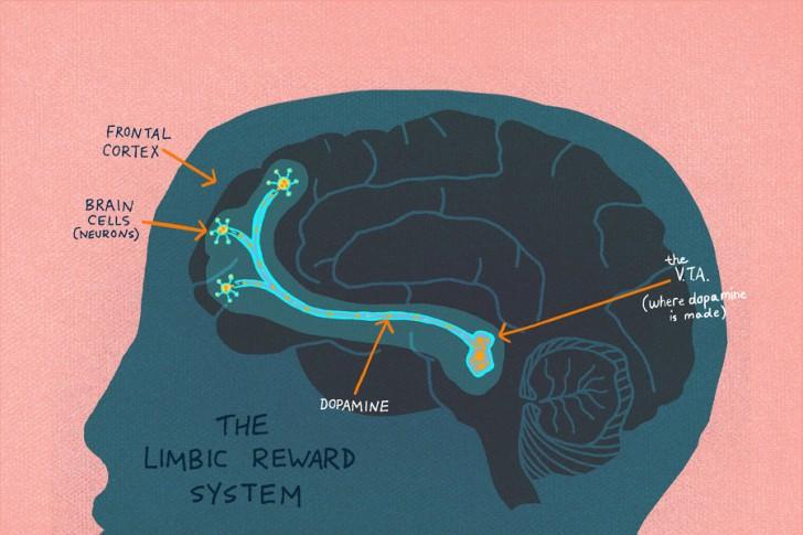 Układ nagrody w mózgu człowieka. Źródło: NPR