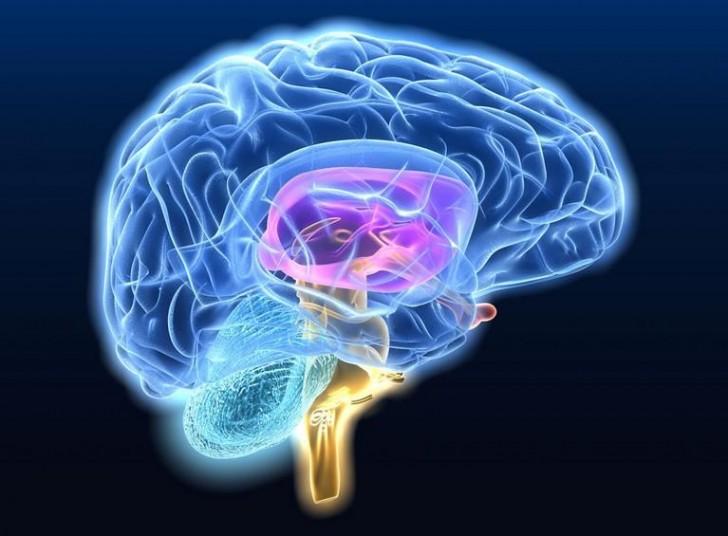 mozg-czlowiek