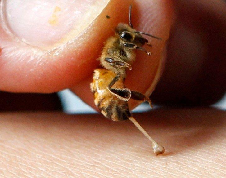 terapia pszczelim jadem