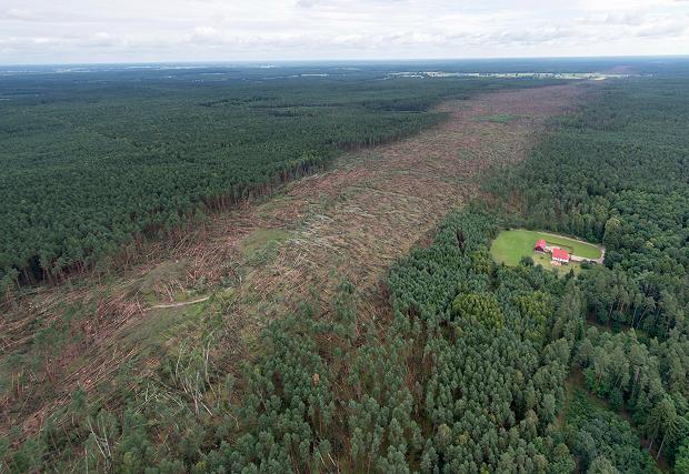 Ścieżka trąby powietrznej w Borach Tucholskich. Fot. Kacper Kowalski / FORUM Źródło: twojapogoda.pl