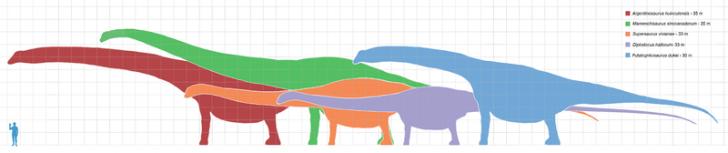 porównanie wielkości największych zauropodów i człowieka. Źródło wikipedia
