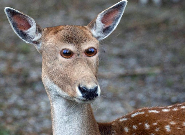 Jakby wyglądały zwierzęta, gdyby miały oczy z przodu głowy