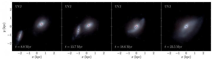 Ta symulacja pokazuje, jak połączyć dwie galaktyki w ciągu 15 milionów lat. Czerwone i niebieskie kropki ilustrują dwie czarne dziury (zdjęcie: Astrophysical Journal).