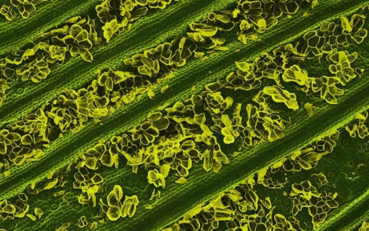 food-under-the-microscope-looks-amazing-50114
