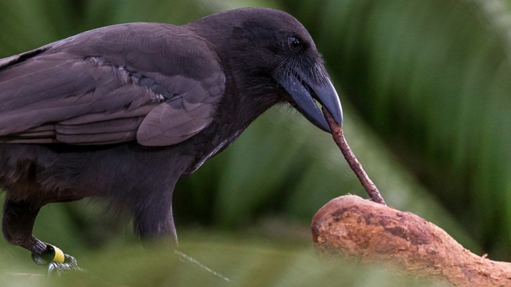 Zdjęcie: Ken Bohn / San Diego Zoo Global