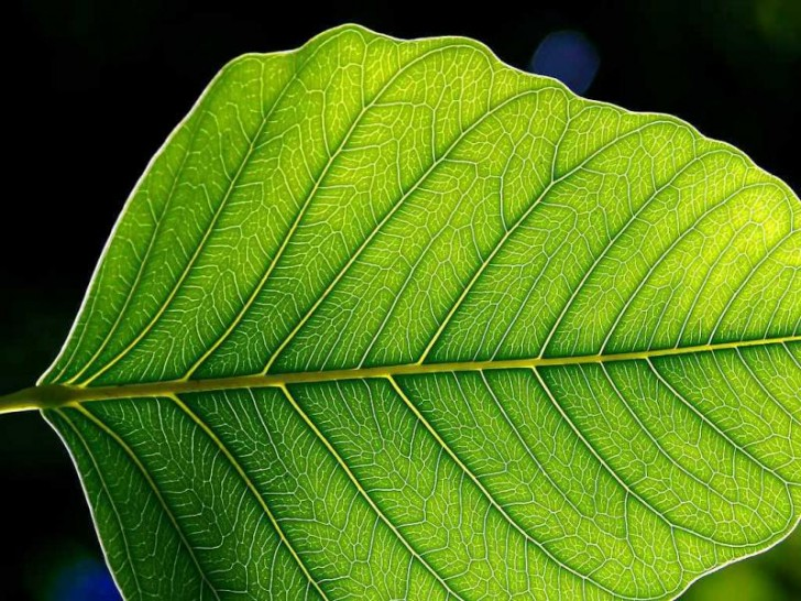 [QUIZ] Czy potrafisz rozpoznać polskie drzewa po liściach?