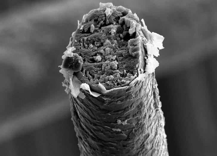 under-microscope-human-hair