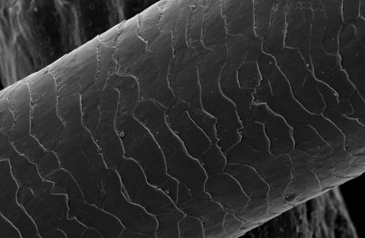 under-microscope-strand-of-hair