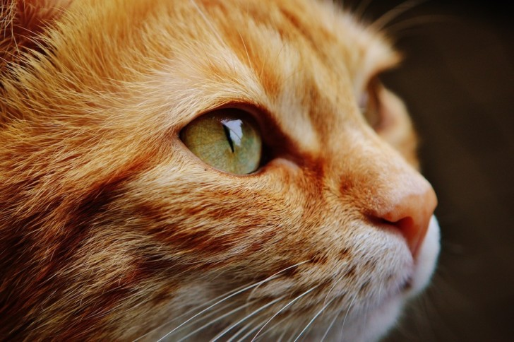 cat-face-close-view-115011-large