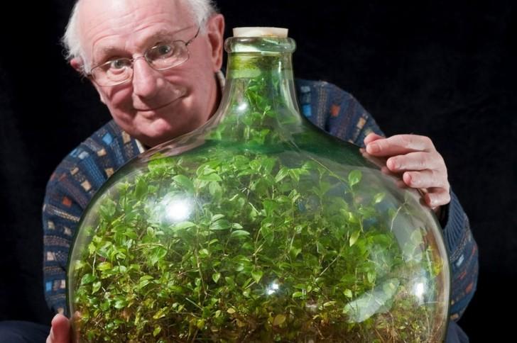 Stwórz swój własny ogród w zamkniętej butli