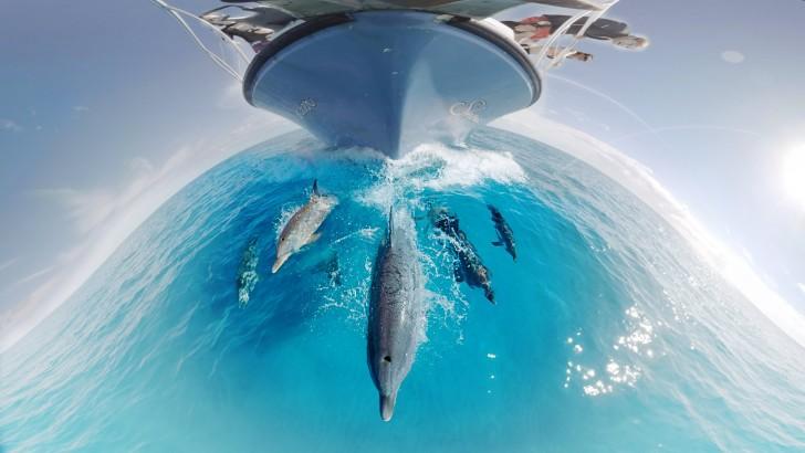 Pływaj z delfinami (filmie w technice 360 stopni)