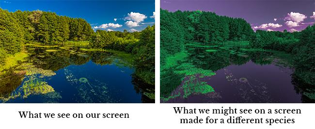 species-screen