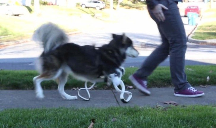 derby-the-dog-gets-new-3d-printed-legs-1