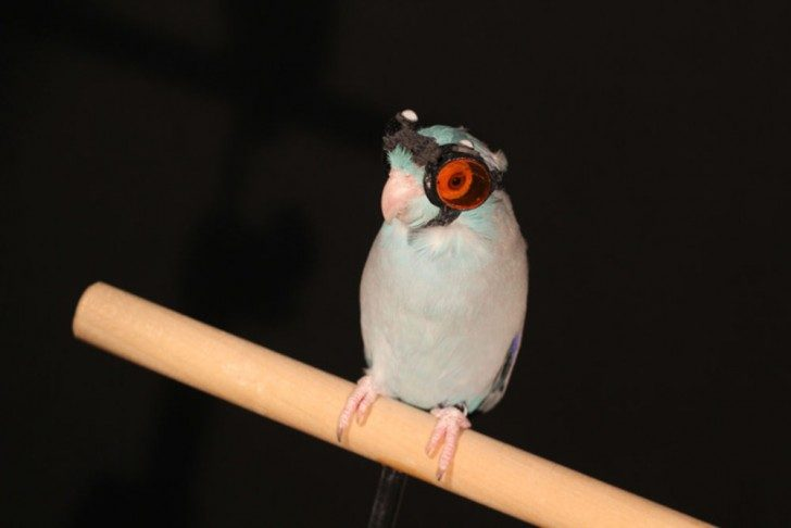 bird_goggles_0