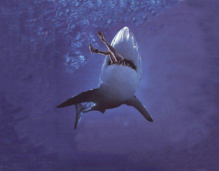 rekin-mit