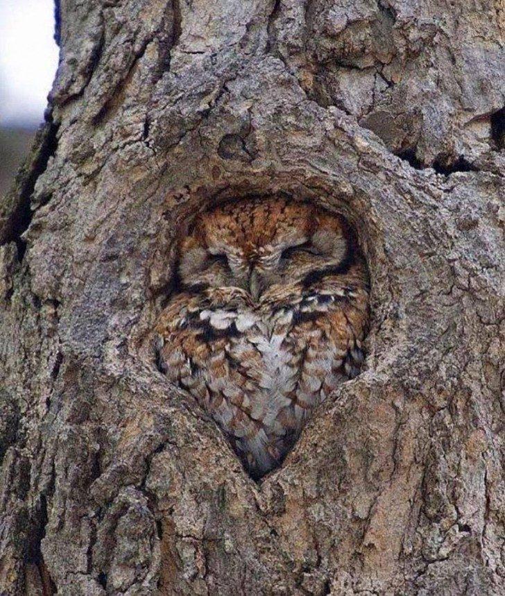 Znajdź sowę…