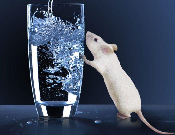 Zdjęcie szklanki wody oraz stojącej przy niej myszy. Tak naprawdę to photoshop.