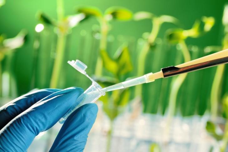 Zdjęcie pokazujące jedną ze standardowych metod pracy w laboratorium biologicznym, czyli pipetowanie.