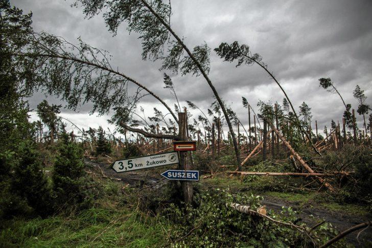 Na zdjęciu widoczne połamane przez wiatr drzewa sosnowe w okolicy leśnictwa Żukowo.